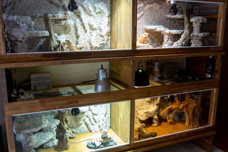 フトアゴヒゲトカゲの木製ケージ