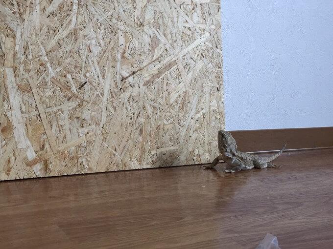 木製自作ケージに使うOSB合板