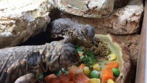 爬虫類の餌入れと水入れ