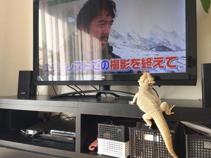 テレビを見るどんぐり氏