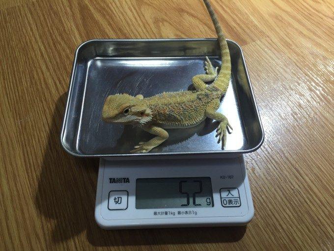 体重を量るきなこさん